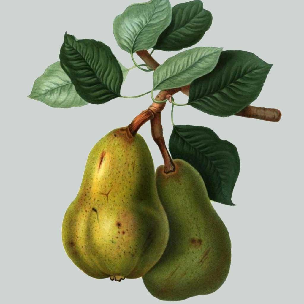 Rothman & Winter Orchard Pear Liqueur
